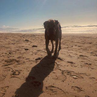 Nutmeg had a beach adventure! 🌊☀️💙