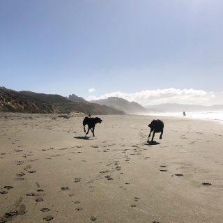 Monday energy 🌊  #beachdogs #beachdogsofinstagram #beachbabes #welovemondays #beachparty #happydogs #dogfriends #tag #play #hiking #hikingwithdogs #dogtraining #positivereinforcementdogtraining #forcefreetraining #joy #rhodesianridgeback #huskiesofinstagram #snackleader #motherocean #motherearth #nature